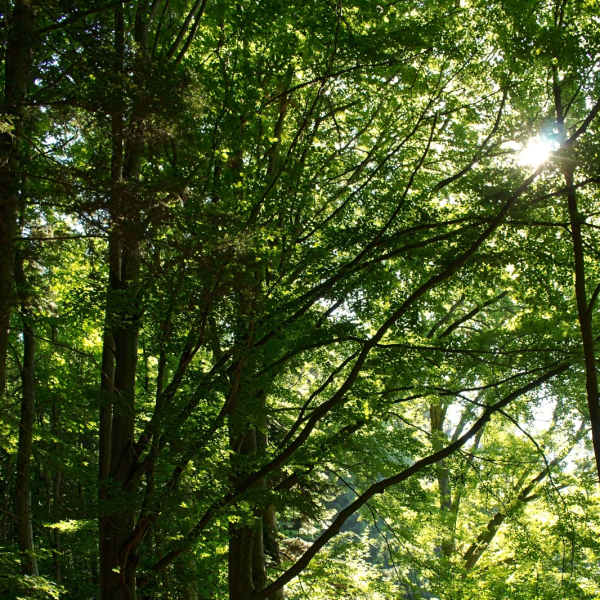 Městské lesy realizovaly zisk